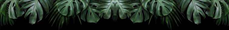 Schermafbeelding 2021-04-21 om 12.32.22